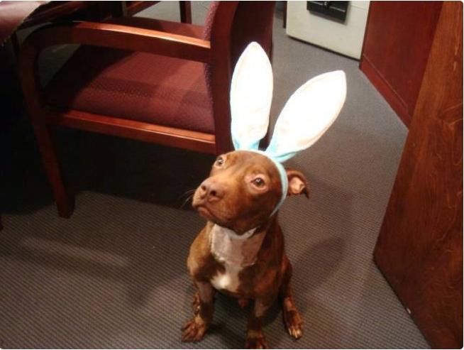Patrick con orejas de conejo