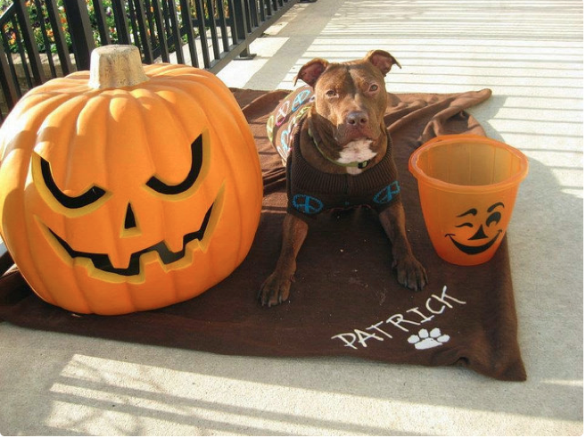 Patrick junto a dos calabazas de Halloween
