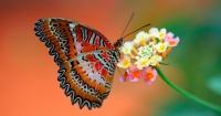 Esta es la espeluznante verdad que no sabías sobre las mariposas y que te hará alejarte de ellas