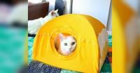 Con una camiseta vieja y dos colgadores puedes hacerle a tu gato esta hermosa casita