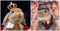 Este conejo logró cautivar al mundo entero con sus peculiares fotografías