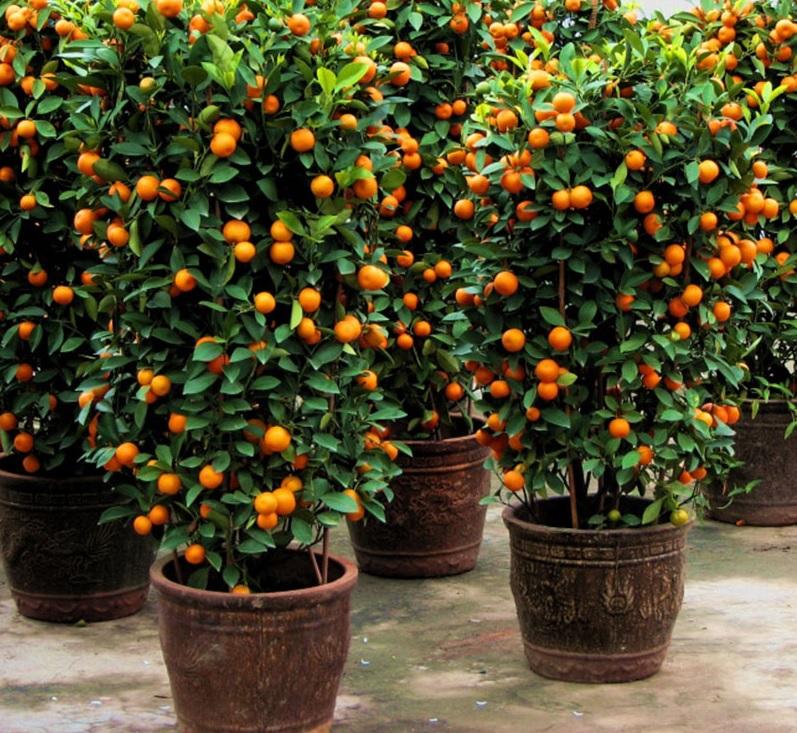 Sab as que puedes plantar estas frutas en tu casa sin for Arboles frutales en maceta