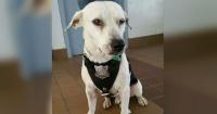 Este perrito callejero entró a una estación de policía y ¡ENCONTRÓ TRABAJO!