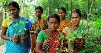 En este pueblo se plantan 111 árboles por cada niña que nace por una injusta razón