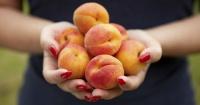 Sabías que puedes plantar estas frutas en tu casa sin necesitad de tener un jardín