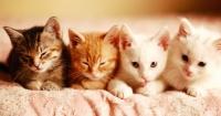 6 entrañables cosas que hacen tus gatos para demostrar que te aman