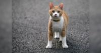 ¿Cómo calmar a un gato por completo? Conoce este simple y eficiente truco