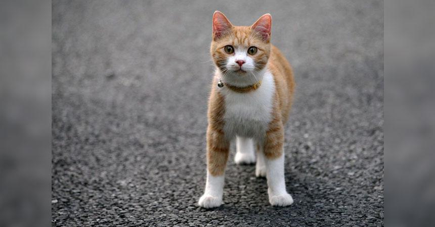 portada-gato-2