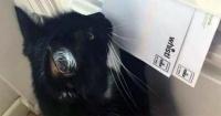 Esta gata fue calificada como un peligro y tiene aterrorizados a los carteros de Inglaterra