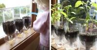 Así es como puedes hacer tu macetero autoregable con botellas de plástico recicladas