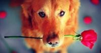 La romántica historia de una pareja de perros que cautiva a una ciudad entera hace 5 años