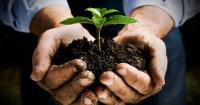 Las plantas pueden pensar, decidir y recordar según los científicos