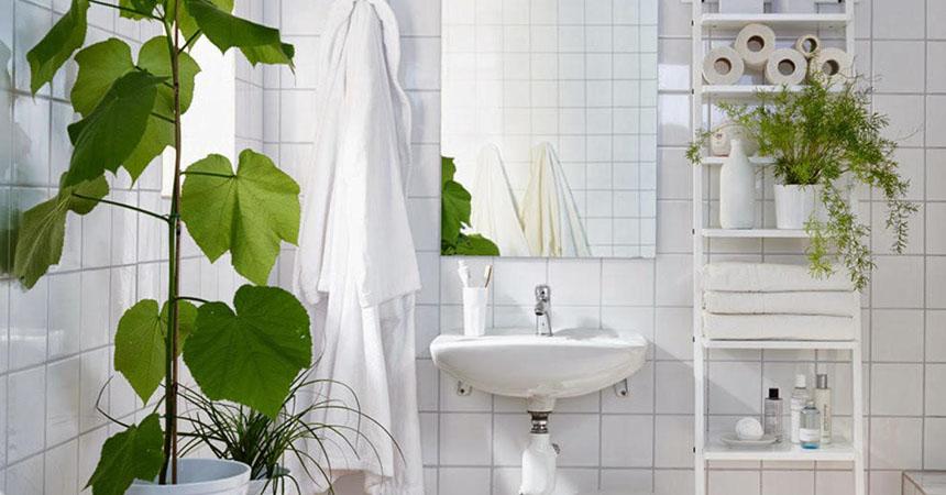 7 plantas que convertir n tu ba o en un lugar con buenas - Plantas en el bano ...