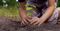 Así es como un ex ingeniero de la NASA pretende plantar 1000 millones de árboles por año