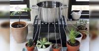 Con este ingenioso sistema podrás regar tus plantas cuando estés de viaje