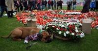 La emocionante imagen de este perro que llora la muerte de un futbolista