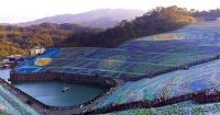 Este artista usó 4 millones de botellas de plástico para recrear una famosa pintura de Van Gogh