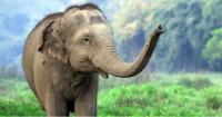 Este parque ambientalista utiliza caca de elefante para hacer papel
