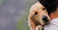 ¿Sientes que tu perro sabe cuándo estás triste? Aquí la explicación