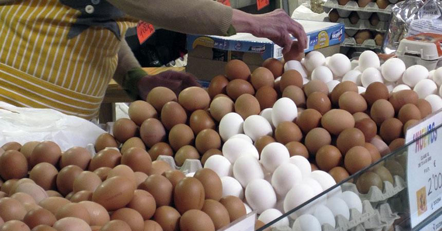 ¿Cuál es la diferencia entre los huevos blancos y los cafés?