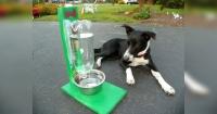 Así es como puedes hacer un recipiente que se autorellena con agua para tu mascota