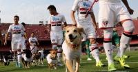 El día en que Sao Paulo saltó con 11 perros a la cancha de fútbol por esta razón