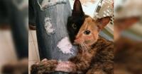 ¡No lo podrás creer! Esta gata tiene dos caras en un mismo cuerpo y es sensación en Internet