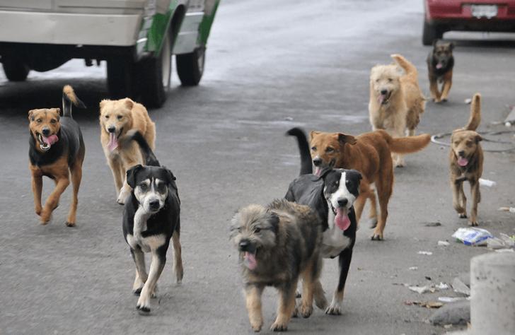 Perros corriendo por las calles