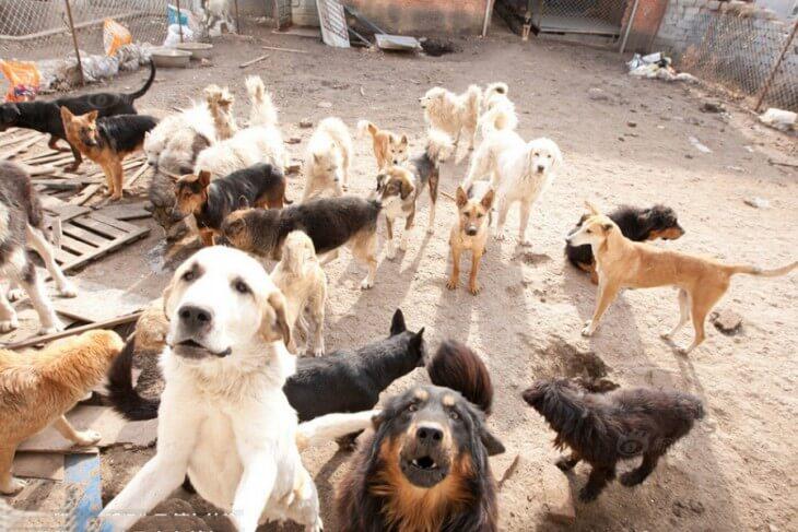 Perros en un patio