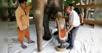 Estos elefantes perdieron una pierna en un campo minado y gracias a este invento hoy pueden caminar