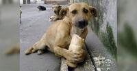 Así es como Holanda hizo para que todos los perros callejeros tengan un hogar