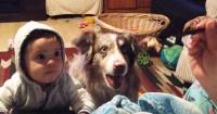 Trataban que el bebé dijera su primera palabra, pero el perro se adelantó y habló por él