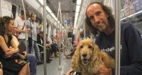 Desde ahora, los perros en Madrid pueden viajar en el Metro como cualquier pasajero