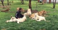 Cuidador es sorprendido por un tigre y leopardo