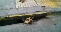 Rescatan a perro que estuvo atascado cuatro días en una alcantarilla
