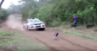 """El """"perro con más suerte del mundo"""" que se salvó por centímetros de morir"""