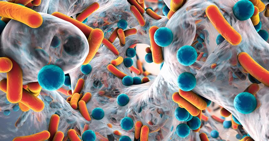 portada-bacteria