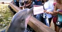 Quiso tomarle una foto con su iPad, pero no sabía que el delfín le jugaría una mala pasada