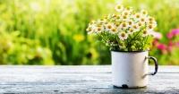 Estas milagrosas plantas son verdaderos purificadores de aire y debes tenerlas en tu casa