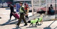 Policías rescataron a perros callejeros y ahora ellos les ayudan a combatir la delincuencia
