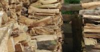 El 90% de las personas logra encontrar el gato escondido en los troncos en 10 segundos. ¿Tú puedes?