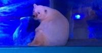Pizza, el oso más triste del mundo: Lo tienen encerrado en un centro comercial