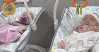 Tienen recien 8 semanas de nacidas y acompañan a su mamá al trabajo todos los días