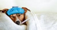 Así es como puedes saber si tu perro tiene fiebre y necesita atención médica