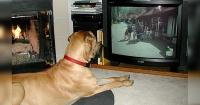 ¿Qué miran los perros cuando ven televisión? Esto es lo que dice la ciencia