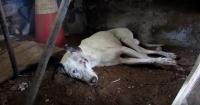 Este perro parecía destinado a morir abandonado pero ocurrió el milagro