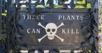 Es el jardín más mortífero del mundo y no podrás ni siquiera oler sus plantas
