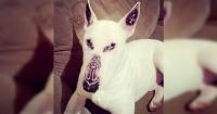 Cometió la estupidez de tatuar a su perro y lo justificó de la manera más ridícula posible