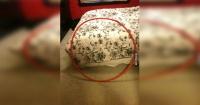 ¿Ves lo que hay en el círculo rojo? La foto que tiene confundida más de 65 mil personas