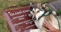 Amistad para siempre: Desde ahora las mascotas podrán ser enterradas con sus dueños